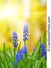 όμορφος , μπλε , λιβάδι , (shallow, dof), λουλούδια