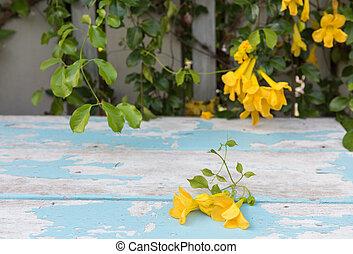 όμορφος , ξύλινος , κρασί , φύλλα , βάφω κίτρινο αγίνωτος , tabletop , φόντο , λουλούδια