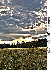 όμορφος , ουρανόs , πάνω , σιτάλευρο αγρός