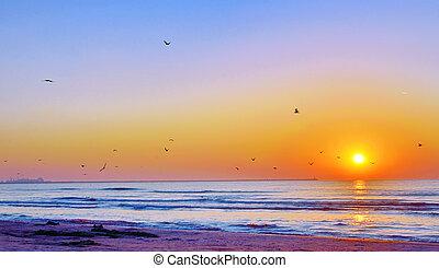 όμορφος , παραλία , μαύρο , ανατολή , θάλασσα