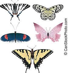 όμορφος , πεταλούδες , 2