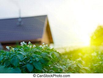 όμορφος , σπίτι , πράσινο , κήπος , ηλιοβασίλεμα