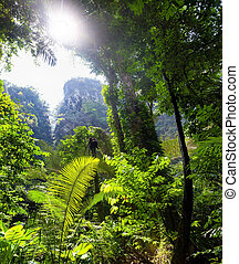 όμορφος , τροπικός , ζούγκλα , φόντο , τοπίο , δάσοs