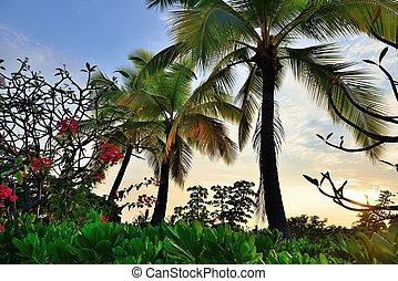όμορφος , τροπικός , ηλιοβασίλεμα , χαβάη