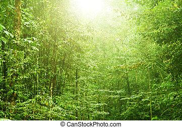 όμορφος , τροπικό δάσος