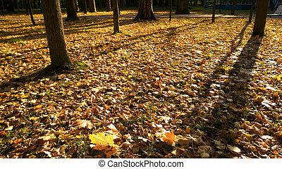 όμορφος , φθινόπωρο , σκηνή , forest.