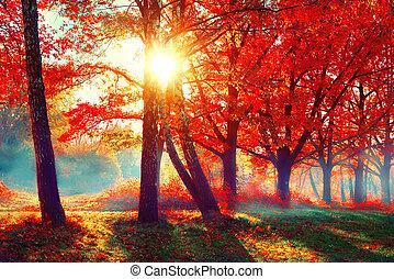 όμορφος , φύση , autumn., πάρκο , φθινοπωρινός , scene., πέφτω