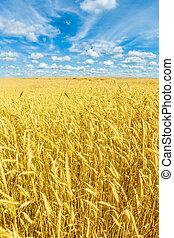 όμορφος , χρυσαφένιος , σιτάλευρο αγρός , και γαλάζιο , ουρανόs