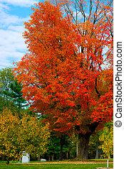 όμορφος , χρώμα , φθινόπωρο , ανάφλεξη , φύλλωμα , ευφυής , πορτοκάλι , σφένδαμοs