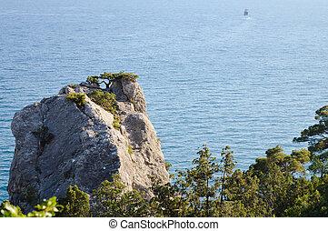 όμορφος , composition., seascape., φύση , δέντρο , πεύκο , βράχοs