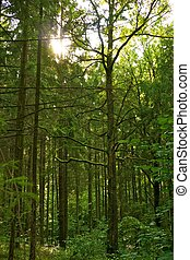 όμορφος , forest.