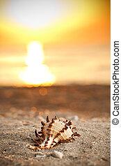 όστρακο , ηλιοβασίλεμα