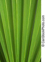абстрактные, пальма