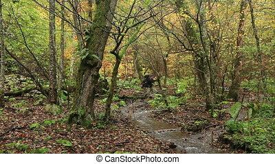 авантюрист, лес