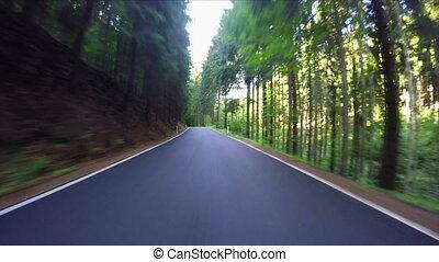 автомобиль, путешествовать, лес, дорога