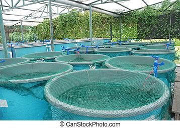 аквакультура, ферма, сельское хозяйство