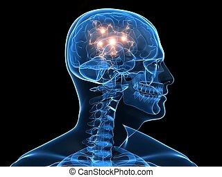 активный, головной мозг
