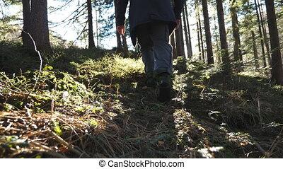 активный, pinery, концепция, задний, движение, walks, рано, background., spring., солнечный лучик, следовать, лес, путешественник, ноги, красивая, здоровый, турист, lifestyle., медленный, идет, молодой, сосна, посмотреть, мужской