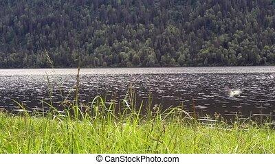 алтай, посмотреть, республика, озеро, teletskoye
