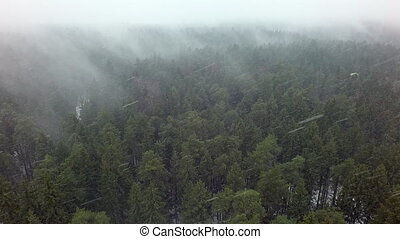 антенна, лесистая местность, посмотреть, зима, снегопад, ...