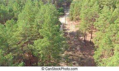 антенна, лес, дорожка