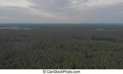 антенна, лес, сумрак