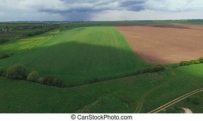 антенна, небо, поля, soil., пшеница, зеленый, под, растение, посмотреть