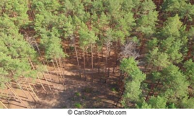 антенна, сосна, deforestation