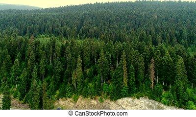 антенна, trees, видео, 4k, зеленый, лес