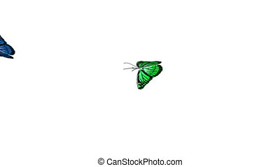 бабочка, анимация, 4