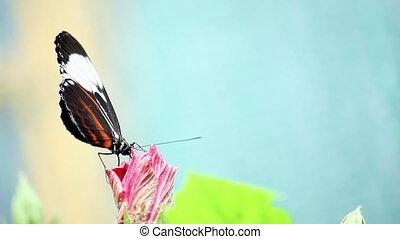 бабочка, время года, цветок, лето