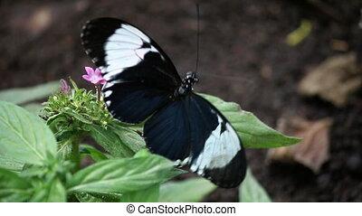 бабочка, закрыть, цветок, вверх