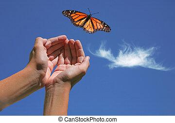 бабочка, монарх, выпущенный
