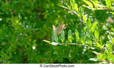 бабочка, прут, зеленый, сад