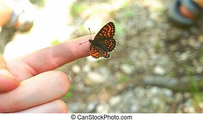 бабочка, сидящий, mans, рука