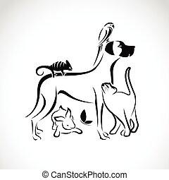 бабочка, собака, группа, pets, хамелеон, попугай, -, isolated, вектор, задний план, кот, белый, кролик