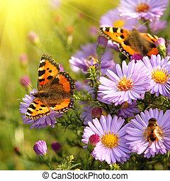 бабочка, цветы
