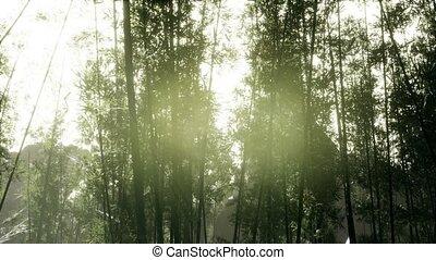 бамбук, лесок, ветреный, спокойный, arashiyama