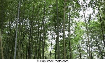 бамбук, лес, кастрюля