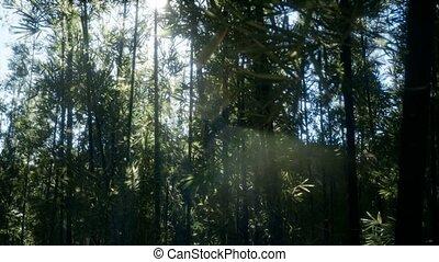 бамбук, спокойный, лесок, arashiyama, ветреный