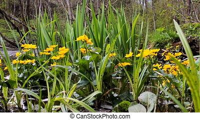 банки, весна, куст, цветок, ручей