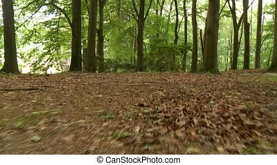 бег, лес