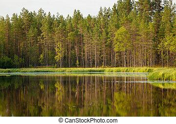 безмятежный, утро, солнечно, отражение, лес