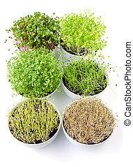 белый, вертикальный, шесть, bowls, microgreens
