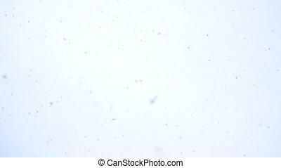 белый, приход, зима, skies, снег