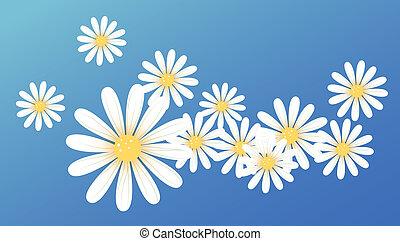 белый, цветок, маргаритка