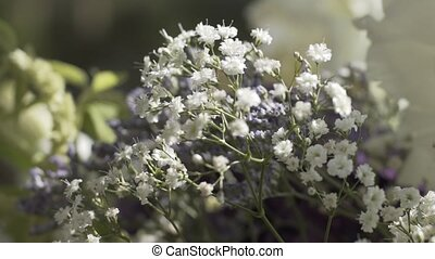 белый, wildflowers, небо, против