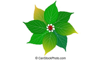 божья коровка, лист, 60, background., зеленый, fps., альфа, белый, канал