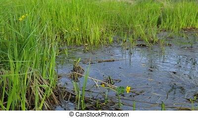 болотный, лето, площадь