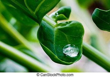 большой, воды, падение, на, зеленый, лист